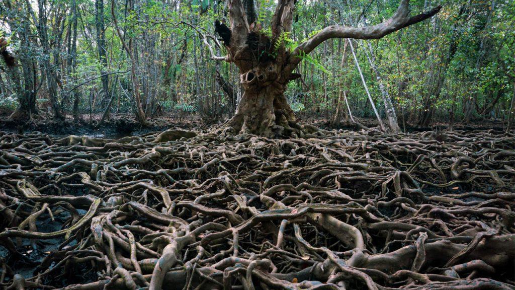 Photo roots Cosmic #26